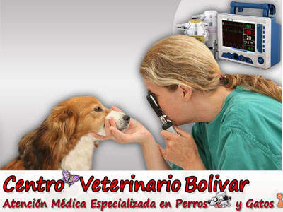 Centro Veterinario Bolivar